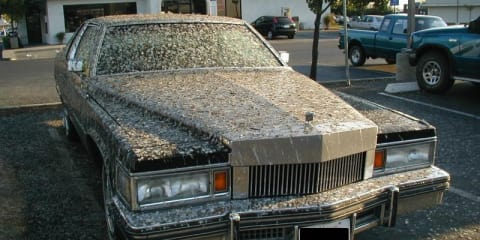 DIY: bird poo paint damage explained - how to protect your car