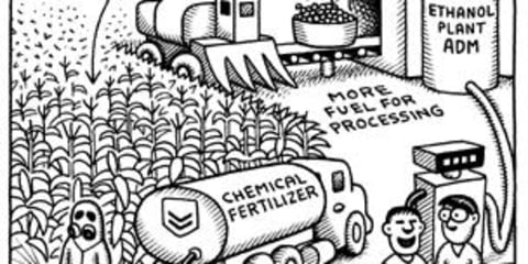 Biofuels not the answer