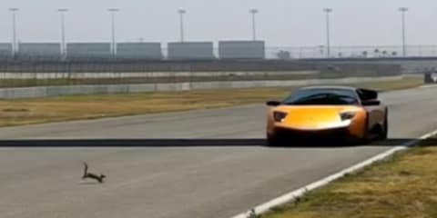 Lamborghini vs squirrel: high-speed head-on video