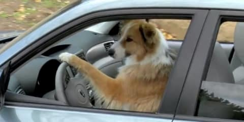 "Subaru's ""Dog Tested. Dog Approved"" commercials"