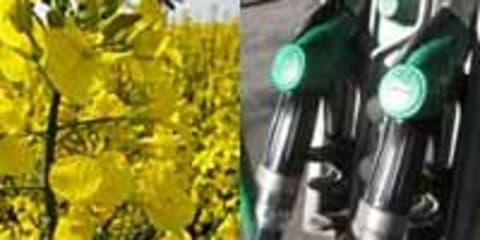 Biofuel Bonanza