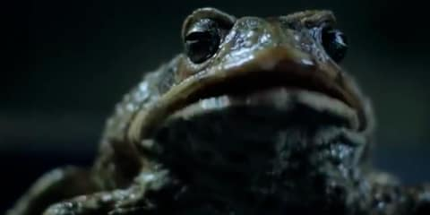 Ford Falcon EcoBoost: promo video canes toad