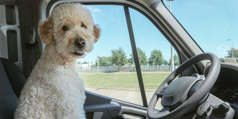 The best cars for dogs: 10 canine-friendly vehicles