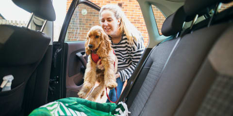 People drive more carefully when their dog is in the car