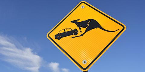 Kangaroos the biggest danger in animal crashes