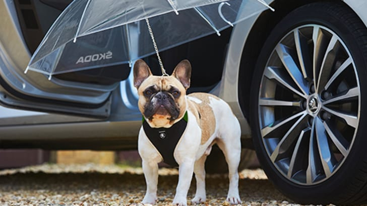 Skoda Canine Umbrella - 1