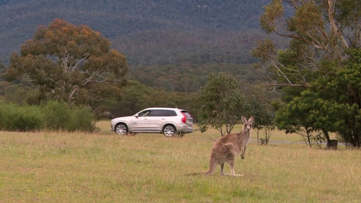 volvo-kangaroo-detection-11